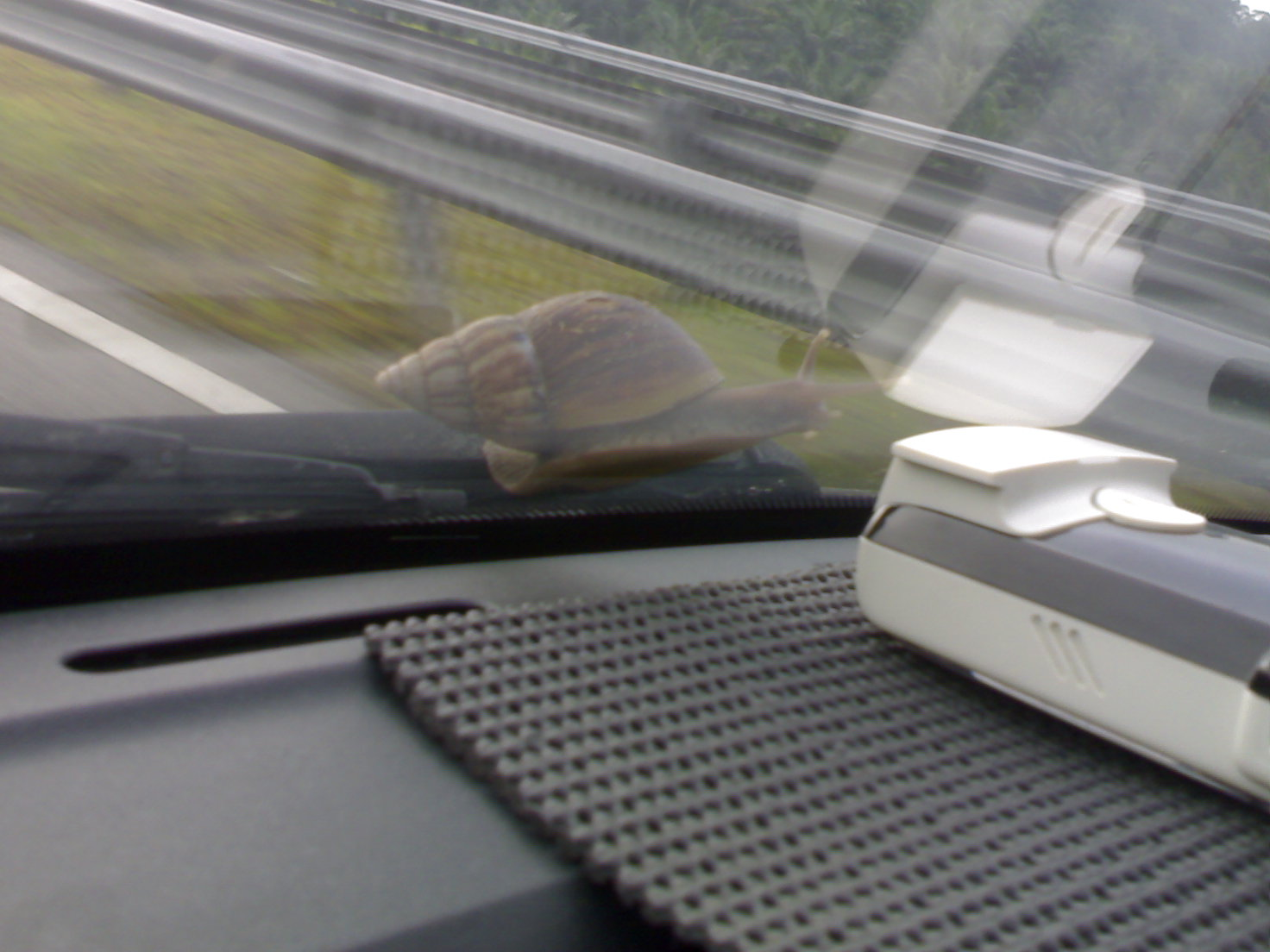 A better view of the climbing snail