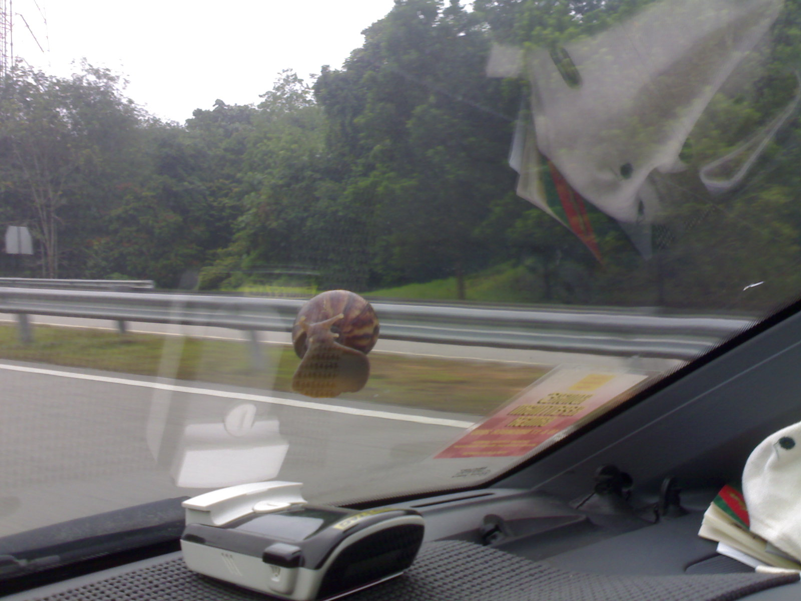 A few minutes later, it moved a few centimetres higher up. I guess it wanted to have a better view of the highway