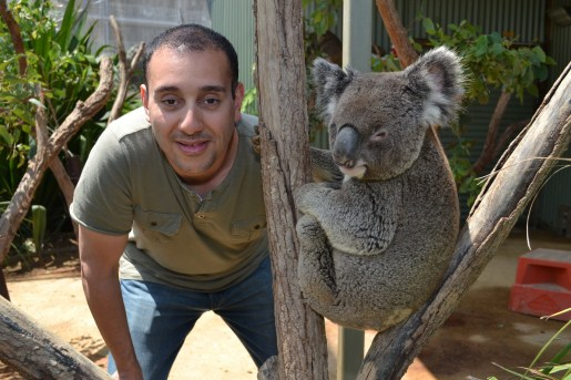 Koala pic_resize