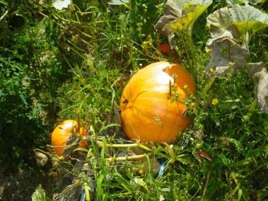 aime-jardinage19-jardins-pluriel-laurac