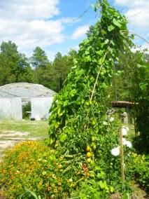 Jardins collectifs