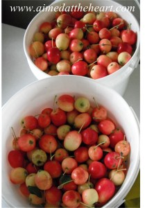 Turning All Those Stupid Little Crab Apples into Butter
