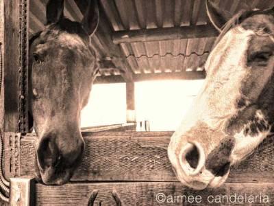 horse-©(warm-pink)