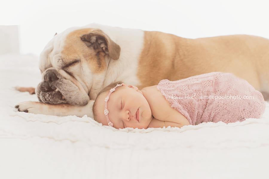 Newborn Brindle Pit Bull Puppies