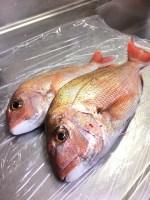 寒~い日に加太で鯛を釣ったったい!釣果も寒~い・・・