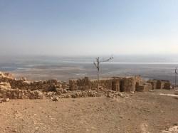 Tree atop Masada