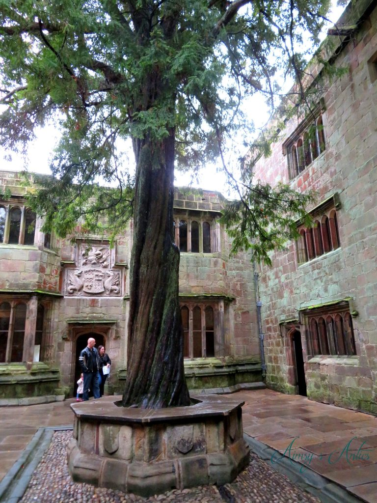 Large tree in the courtyard of Skipton Castle.