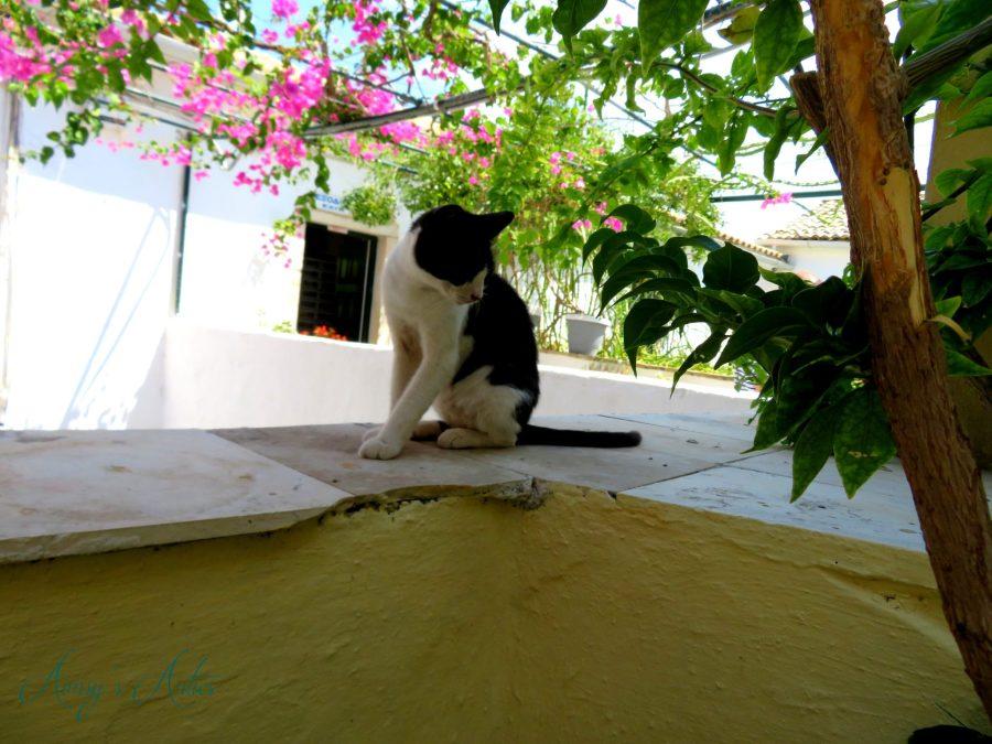 Cat on a wall at Paleokastritsa Monastery