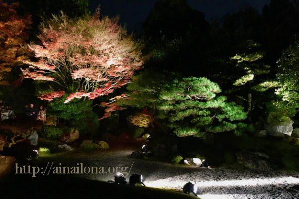 京都・知恩院・友禅苑・紅葉ライトアプ