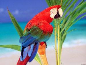 tropical_colors_parrot-normal