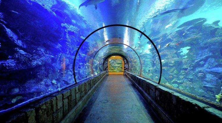 image-shark reef-mandalay bay