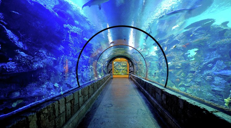 image-shark reef-mandalay bay