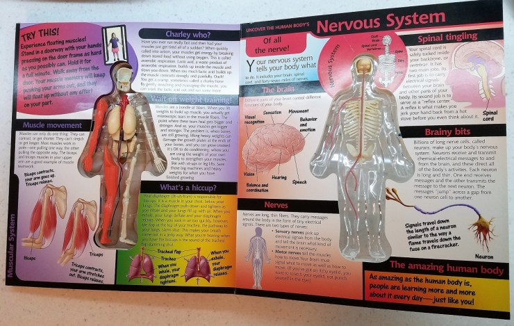 EureKids! -- 'Uncover the Human Body'