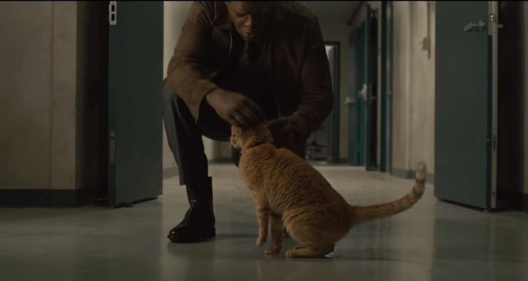Everything we think we know about the cat from the 'Captain Marvel' trailer