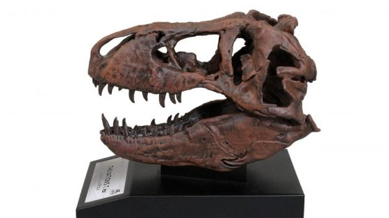 The Nation's T. Rex invades Toynk Toys