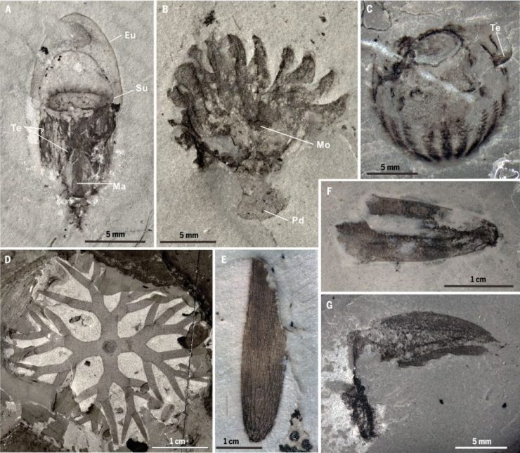 The underground rises -- the biggest geology and paleontology stories of 2019