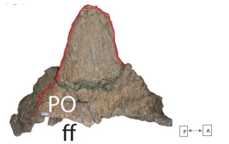 Creative Beast 3D-printed ceratopsian skulls -- a scientific review