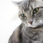 「なぜ猫は可愛いのか」獣医師がマジメに解説してみた。