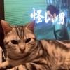隠し撮りとSEGAが嫌いになった猫ほたて。
