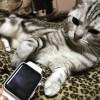 「Apple Watchディスプレイ修理費用は27,800円から」とか、、、