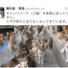 『ご飯を青島の猫たちに送ってください』