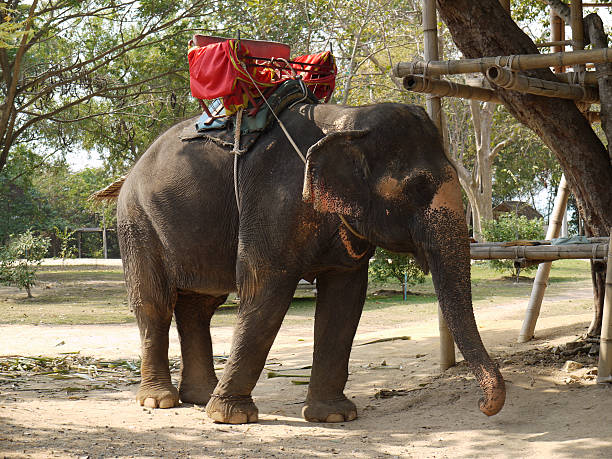 Elephant riding - one form of animal exploitation.