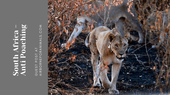 South Africa – Anti Poaching Guest Post