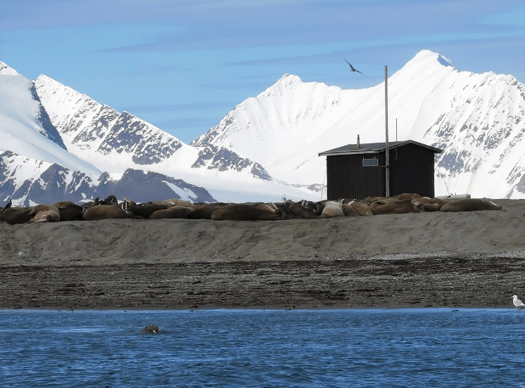 Svalbard – 78 degrees north and full of life