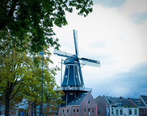 A windmill in Haarlem