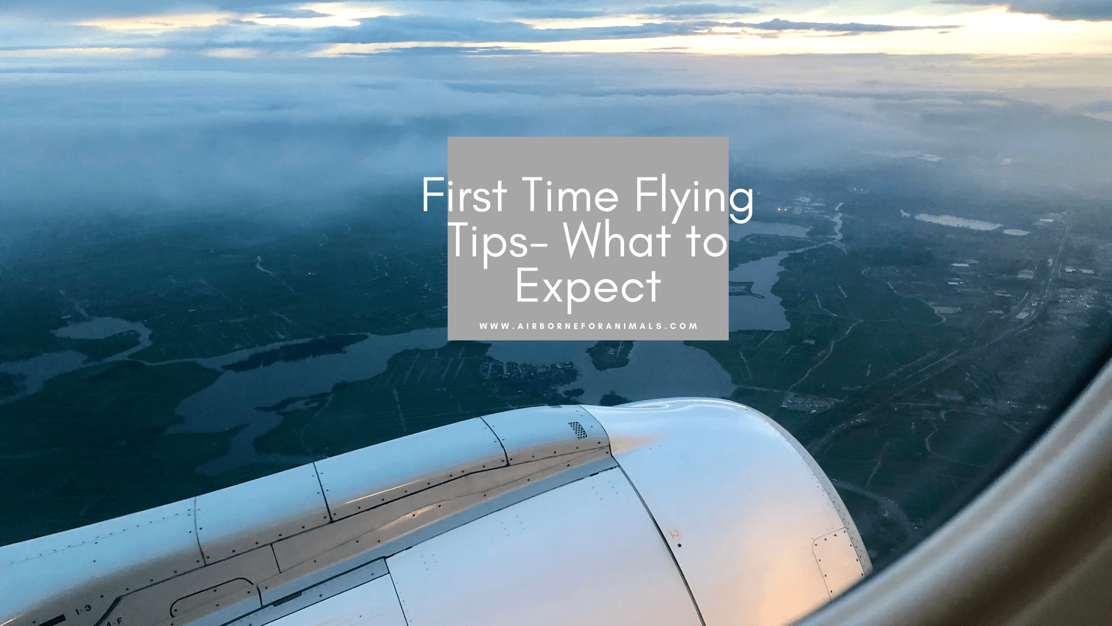 First Time Flying Tips – What to Expect via @airborneforanimals