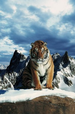 Tigers_Rferences_94