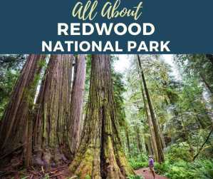 Read more about the article All About Redwood National Park