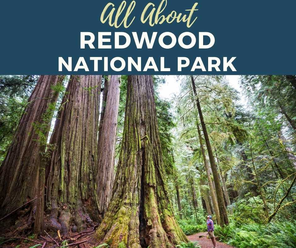 All About Redwood National Park
