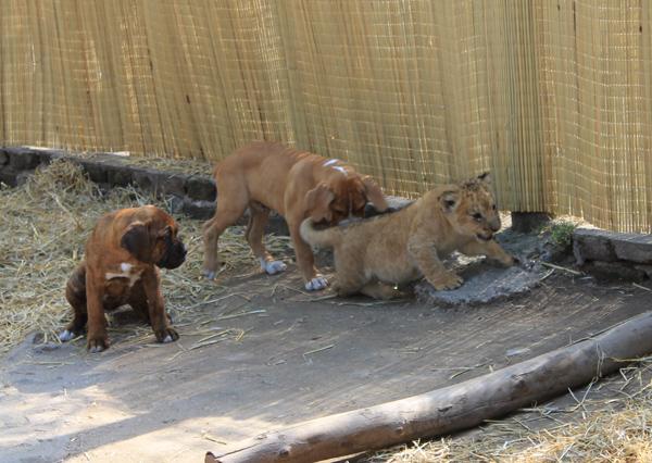 Zoo Lujan Cachorro