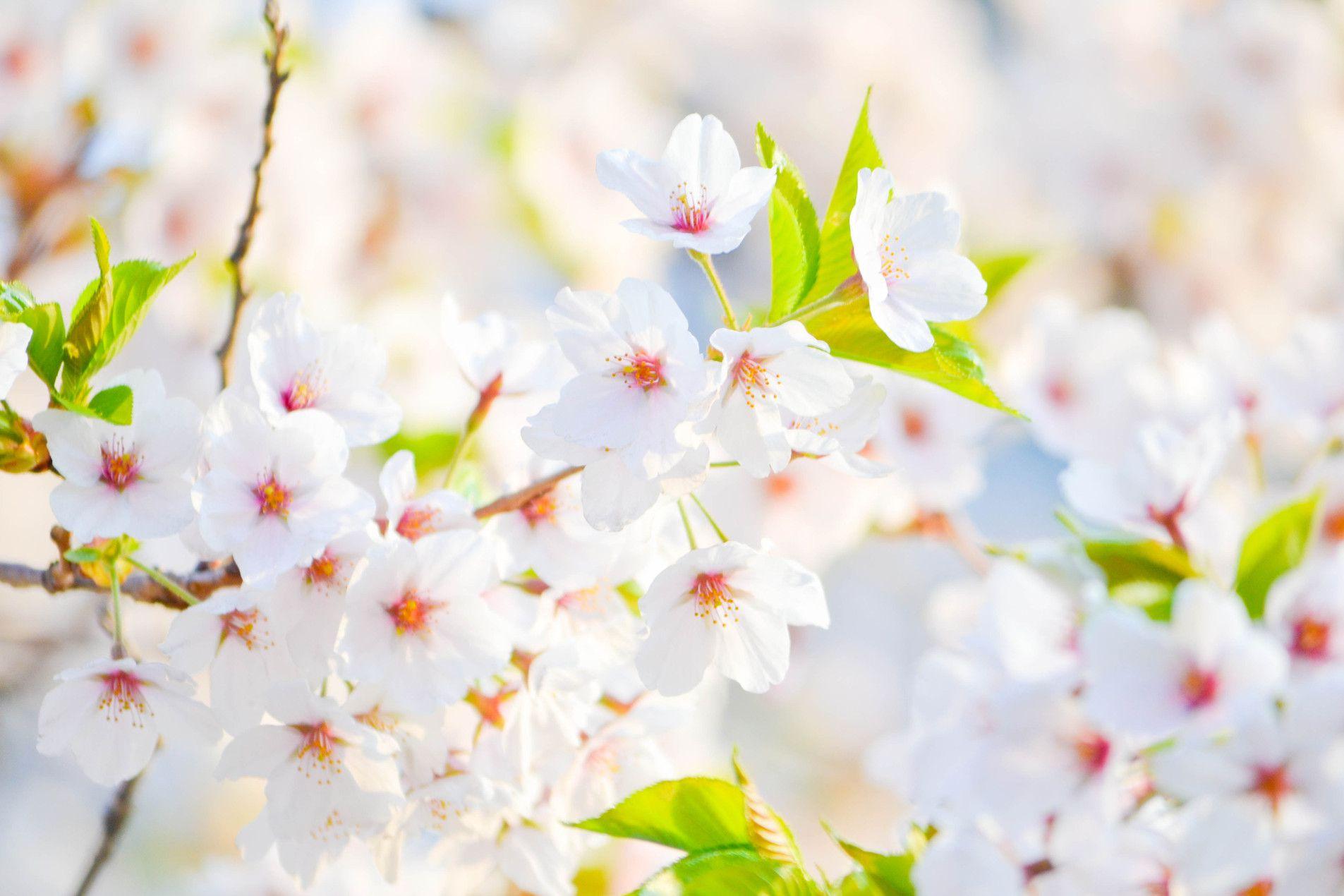 Un ménage de printemps plus écologique