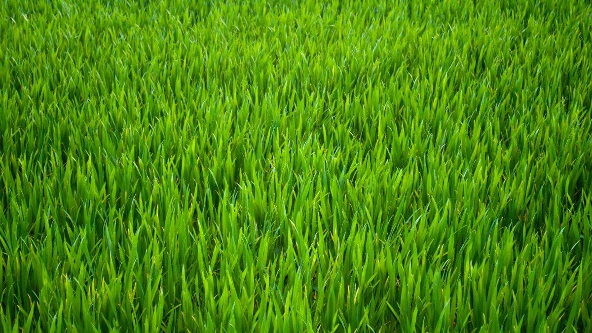 agronomic-drainage-natural-grass