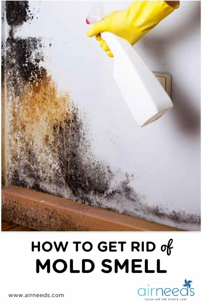 how to get rid of mold smell in bedroom