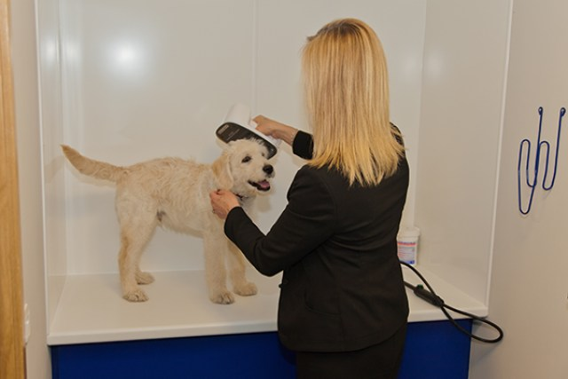 Pets on jets being scanned for microchip