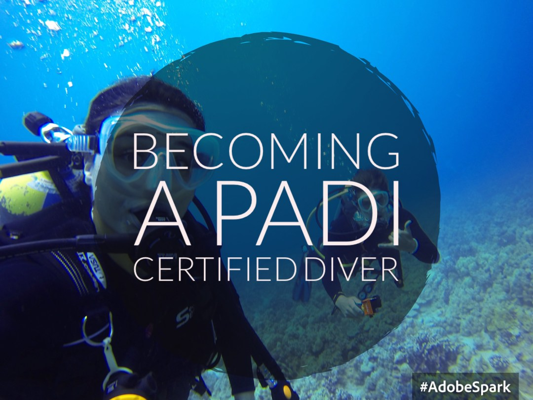 Becoming a PADI Certified Open Water Diver - Airplanes & Avocados
