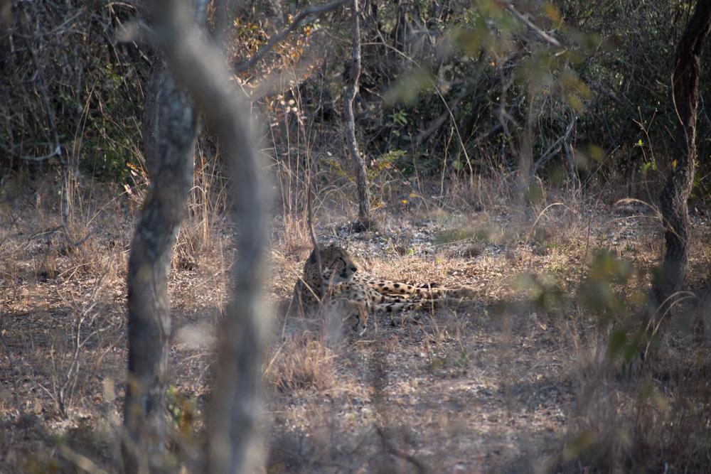 Entabeni Safari Conservancy