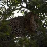 Manyeleti Game Reserve