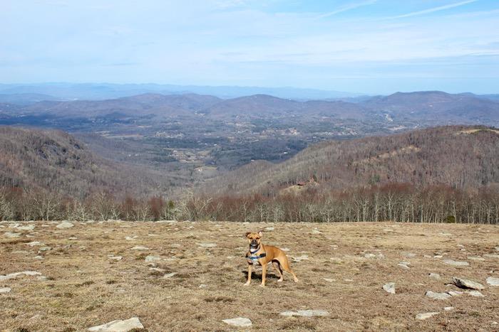 hiking near asheville
