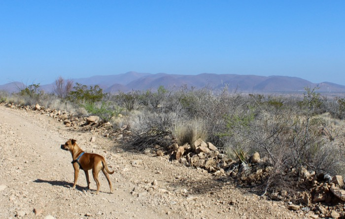 dog at big bend