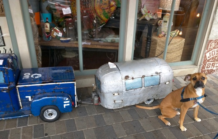 dog by airstream cooler