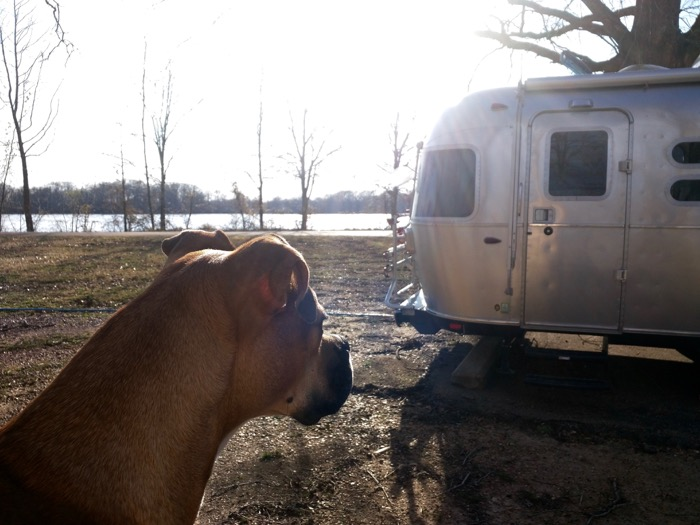 dog and airstream