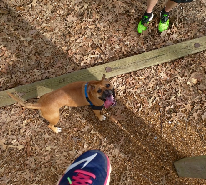 dog on fitness trail