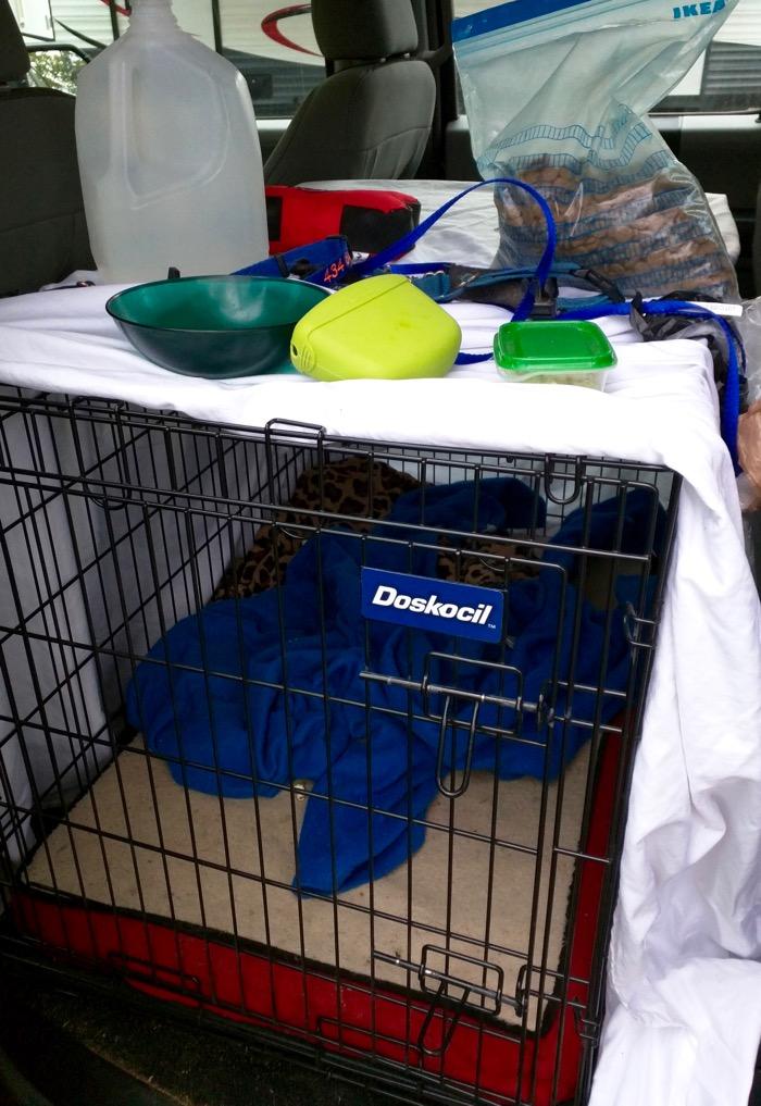 dog crate in truck
