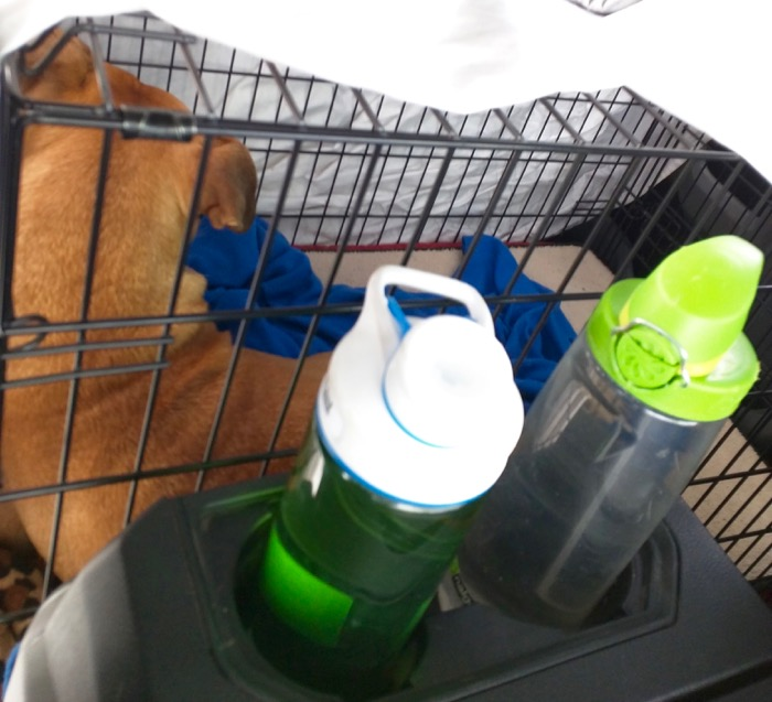 bugsy crate in the truck