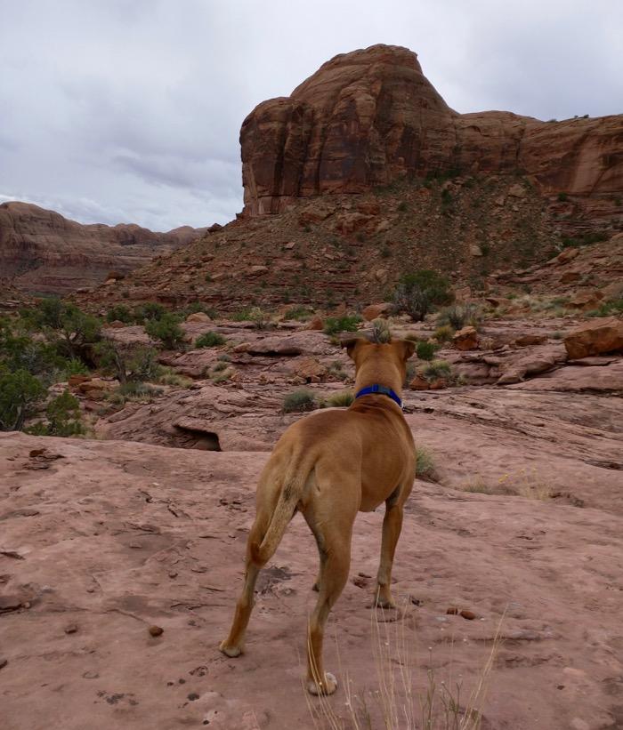 culvert canyon hike