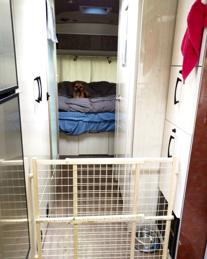 dog in airstream